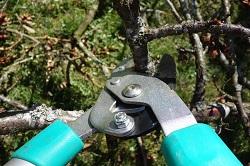 pruning-shears-535350_250