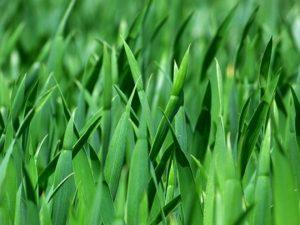 grass-383284_400