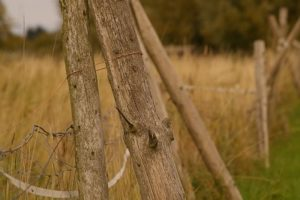 Dry grasses 400 pix